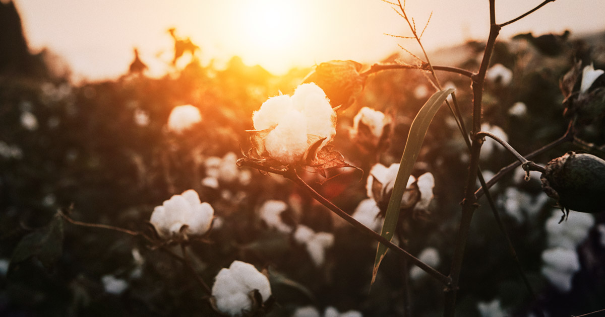 Cotton and The Environment
